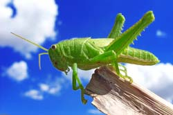 Is it time to tame your 'grasshopper mind'?
