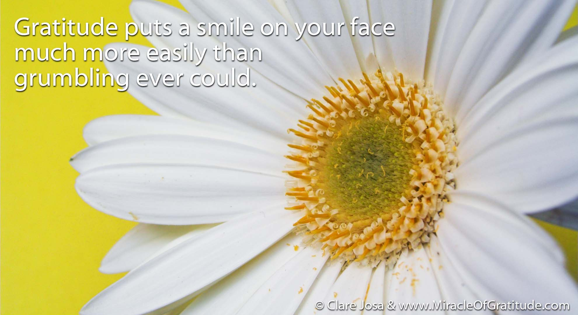 Putting A Smile On Your Face Download This Week S Gratitude Screen Saver Desktop Wallpaper